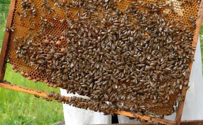 Salamanca una de las provincias más beneficiadas tras la modificación de la norma de calidad de la miel decretada por el Gobierno de España